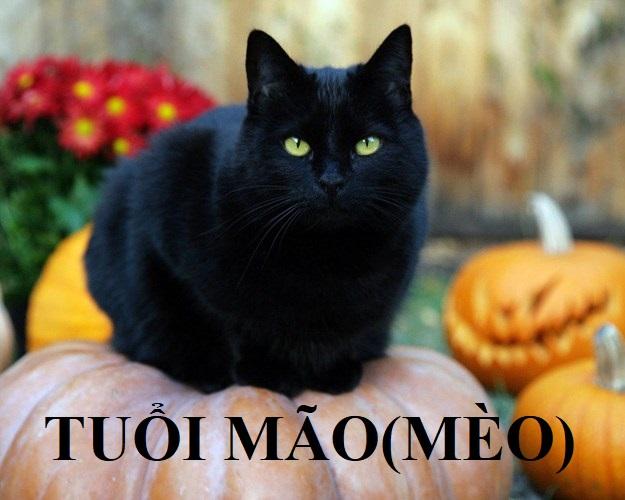 tuổi mão; phong thủy người tuổi mão; mèo